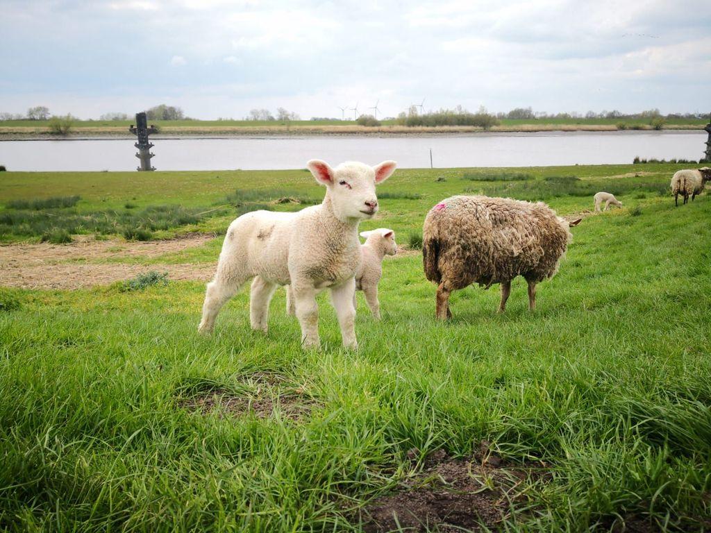 Ostern in Ostfriesland