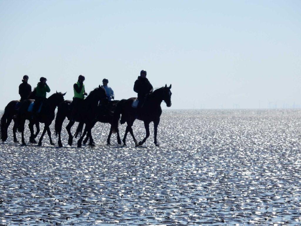 Eine Gruppe Reiter auf einem Ausritt im Watt