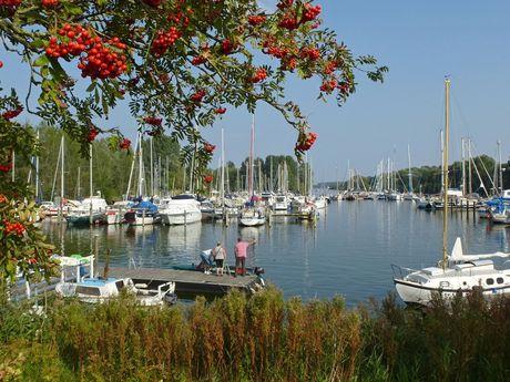 Blick durch die Blätter einer Eberesche auf den Hooksieler Jachthafen