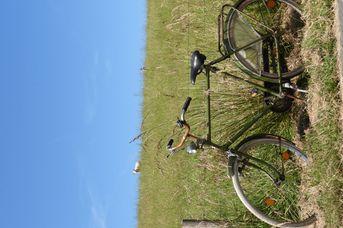 Erlebnisradtour vor und hinter dem Deich