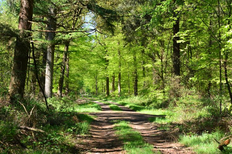 Heseler Wald