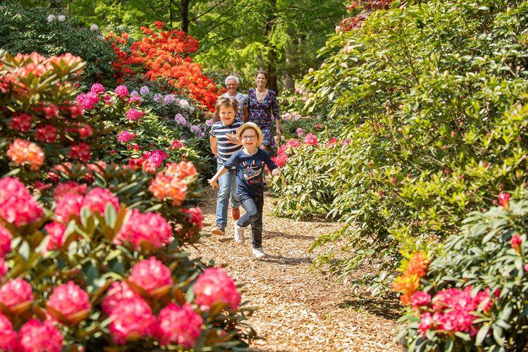 Rhododendronpark-Hobbie