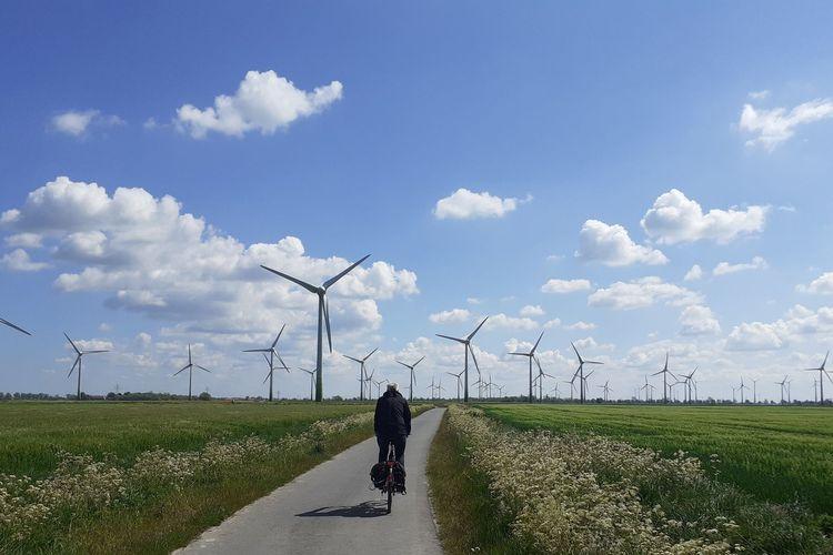 Ein Radfahrer fährt durch die Krummhörn. Im Hintergrund sind Wiesen und Windmühlen zu sehen.