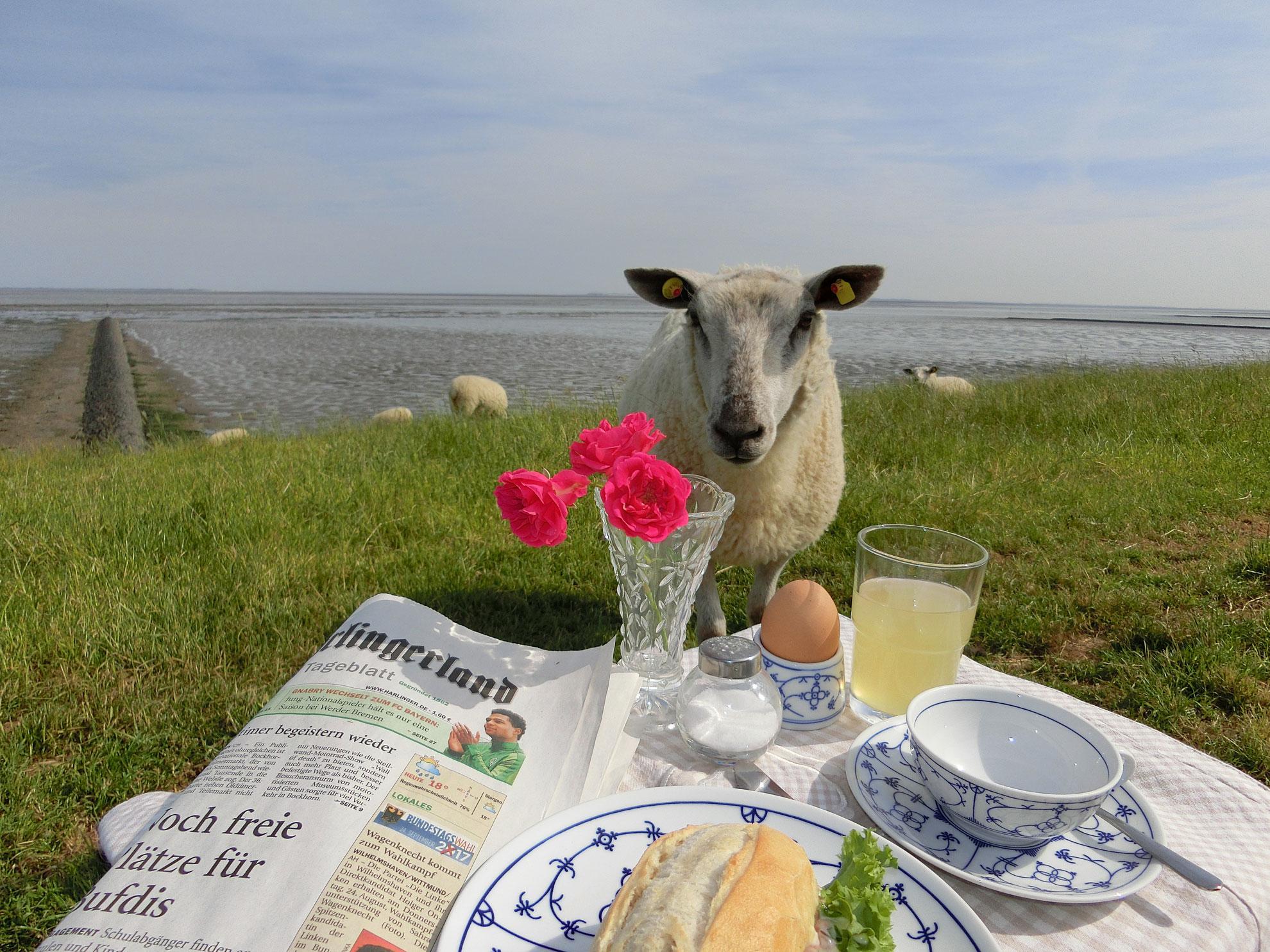 10 Jahre UNESCO-Weltnaturerbe Wattenmeer